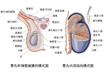 睾丸疼痛到底是什么原因呢